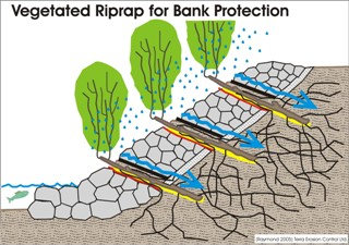 Cross section drawing of vegetated riprap for bank protection