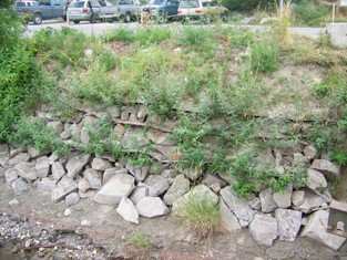 Vegetated riprap growth, August 2008
