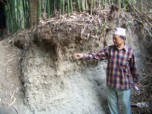 Mr. K B Gurung, showing fibrous bamboo root system